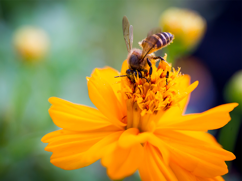 Why your garden needs bees