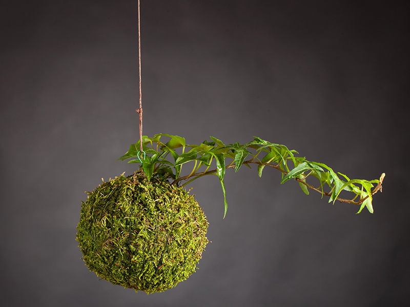 How to make your own hanging Kokedama