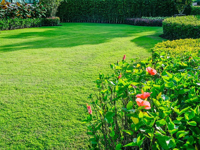Spring secrets for your garden