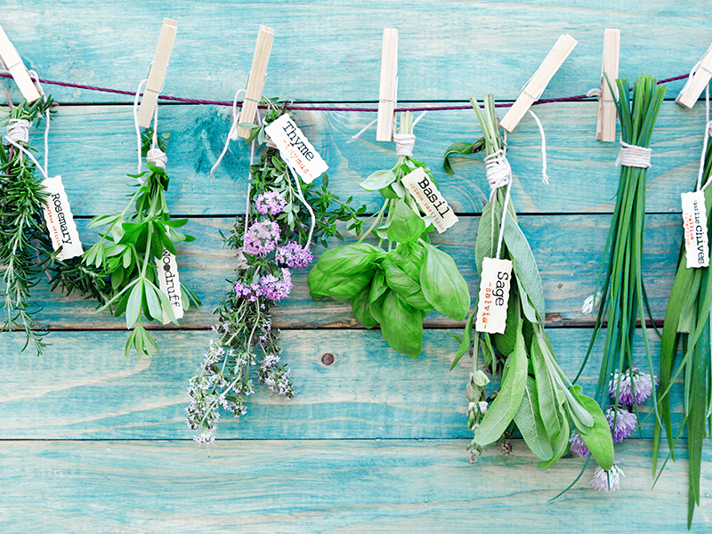Herb garden: dos & don'ts