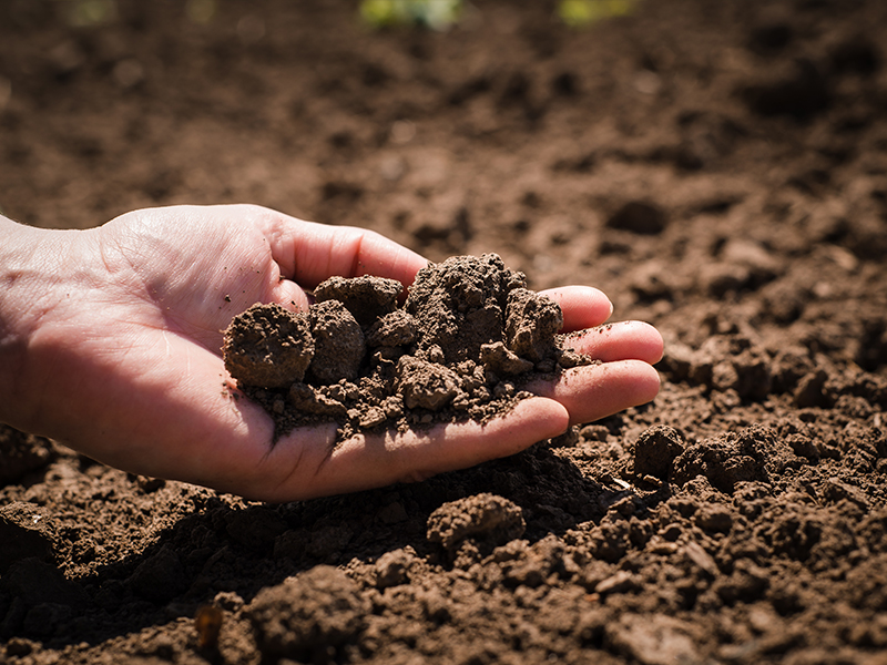 The Dirt on Improving Soil