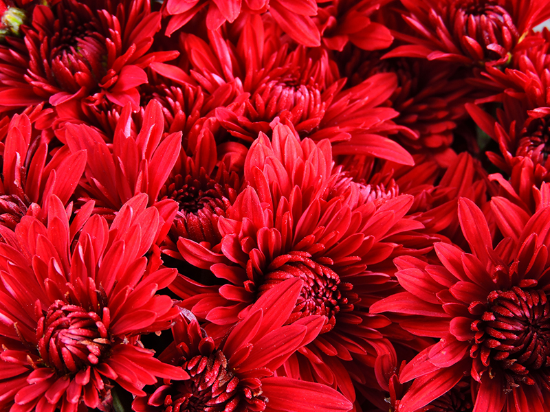5 Valentine's Flowers Symbolic Of Love