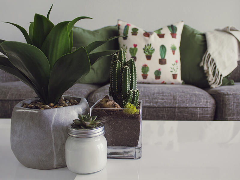 Indoor plants: Care tips for flourishing foliage and flowers