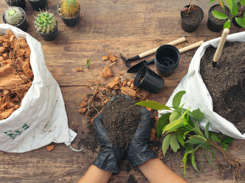 Gardening tips: Your essential gardening checklist for autumn