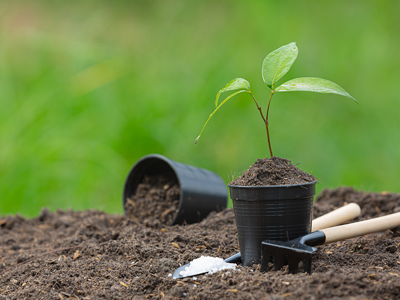 Planting a tree 101: How to do it and what to use
