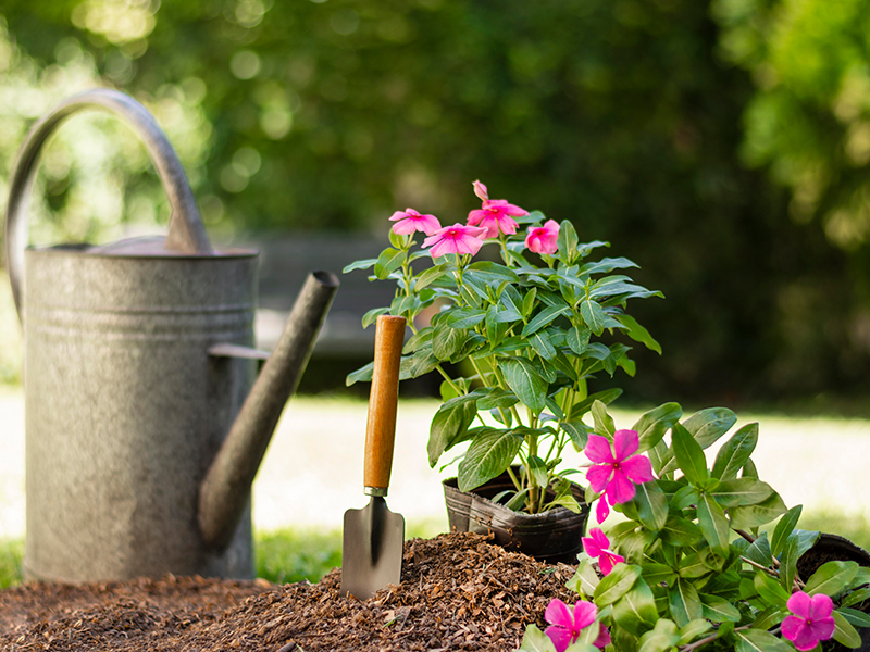 Planting winter flowers and garden care: how to prepare your seasonal checklist